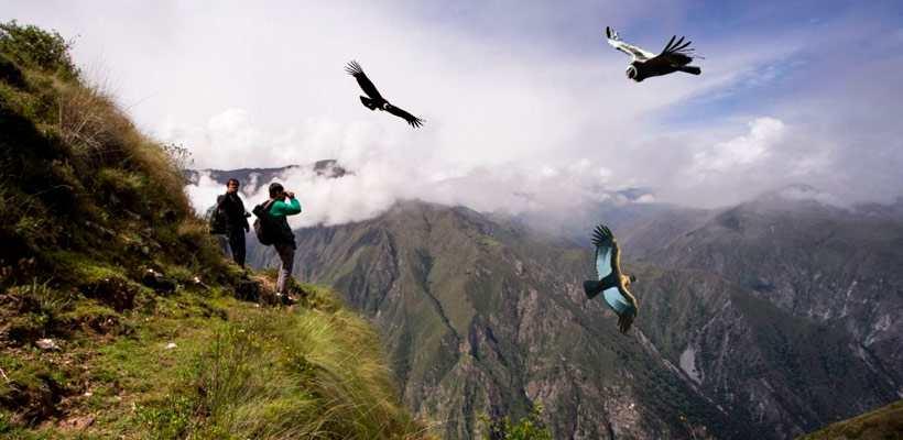 Tours en Cusco, descubre una increíble aventura en el mirador de los cóndores